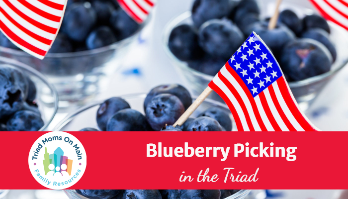 Blueberry Picking in the Triad